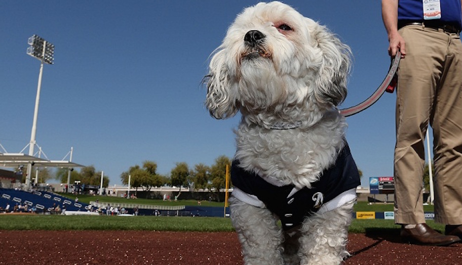 during the spring training game at Maryvale Baseball Park on March 7, 2014 in Phoenix, Arizona.