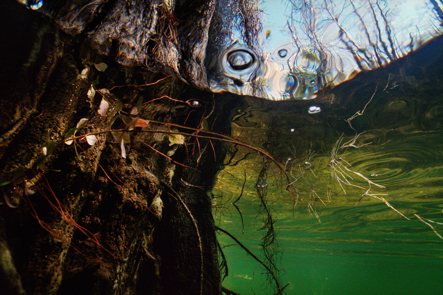 Karen Glaser. Spanish Moss, 2009. From the series Springs and Swamps. Courtesy of the artist