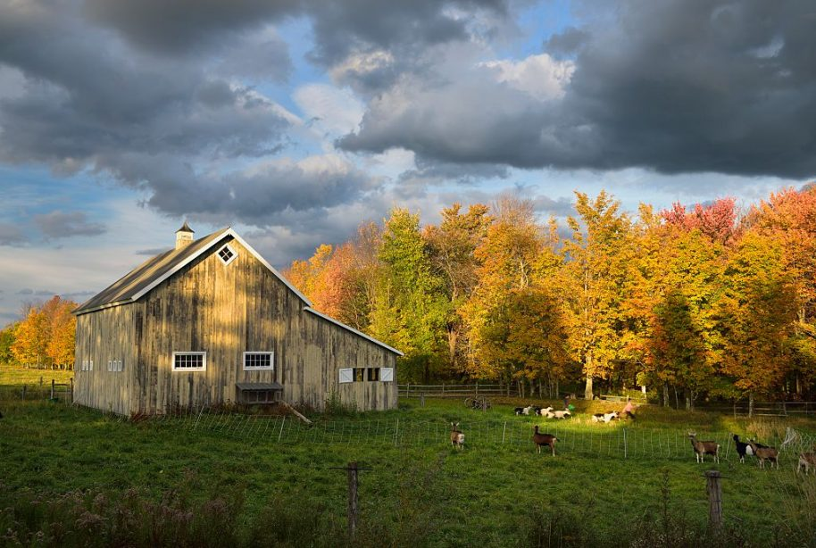 Farmers moving goats at West Hill farm in the Fall near Stowe Vermont. (Photo by: Education Images/UIG via Getty Images)