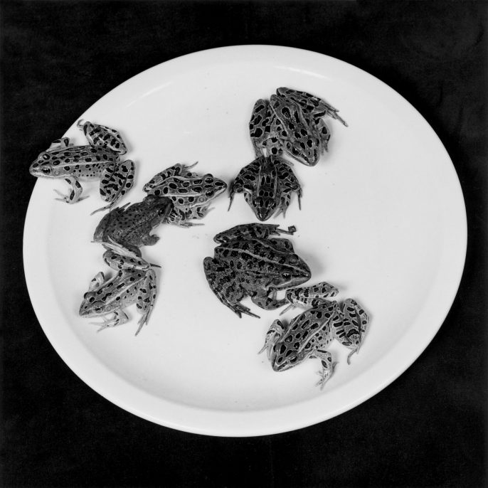 Robert Mapplethorpe, Frogs 1984 © Robert Mapplethorpe Foundation. Used by permission. Courtesy Alison Jacques Gallery, London