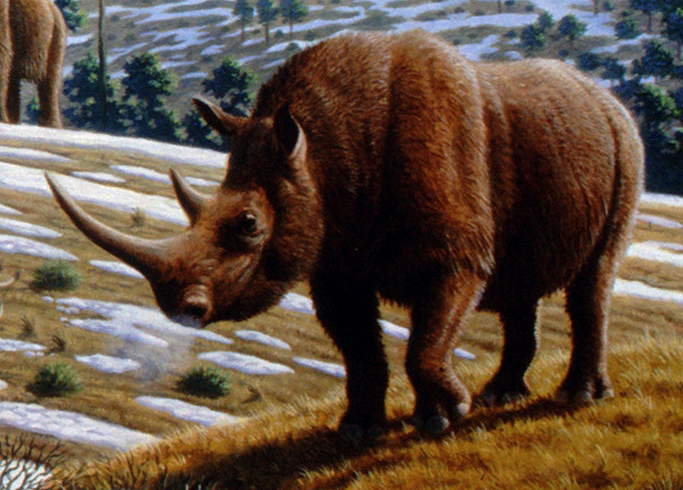 Mauricio Antón, Woolly Rhinoceros. © 2008 Public Library of Science. Courtesy of Wikimedia Commons.