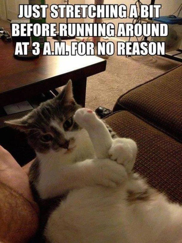 Awesome cat meme