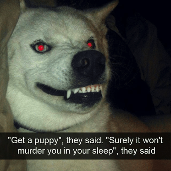 get-a-puppy-they-said-surely-it-wont-murder-you-24511535