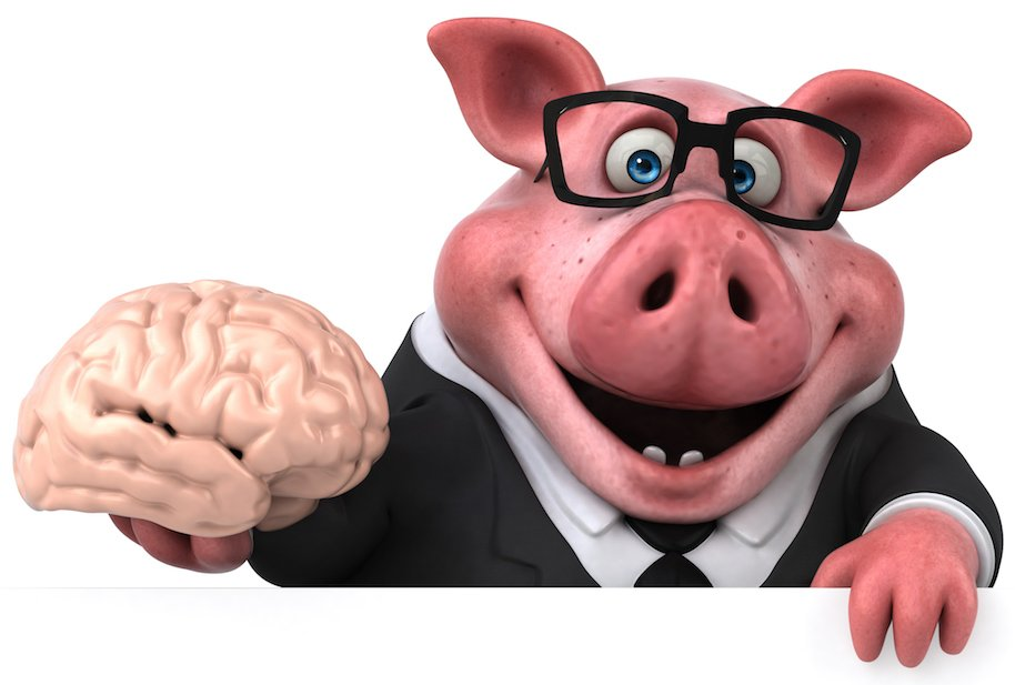 pig brains, immortality, science