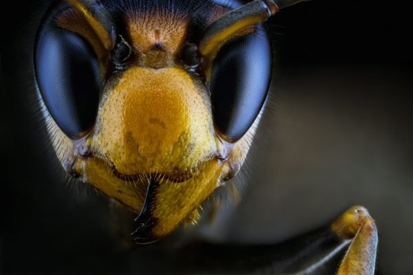 God Sends Murder Hornets to US to Show Things Can Always Get Worse (Or Possibly Another Democrat Sting Against the President)