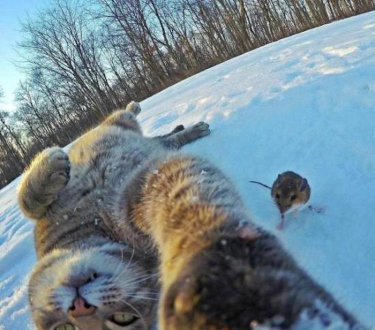 Celfie With Rodent Bomb