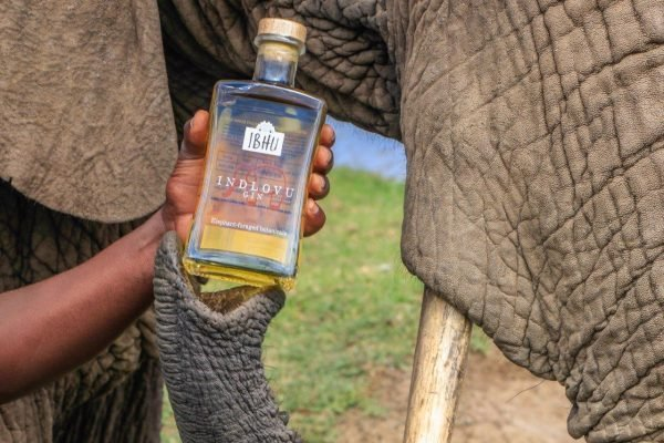 Stinky Drinks: This Gin Has a Smelliest of Ingredients (Elephant Poop)