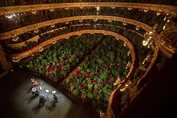 Mandatory Good News: Opera House Reopens Doors to a Full House of…House Plants
