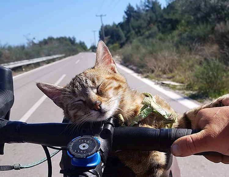 Cyclist Travels World With Only a Bike and Cat (What More Could You Want?)