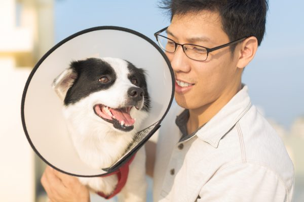 Shame Cone is the Latest Coronavirus Prevention Product (For You, Not the Dog)